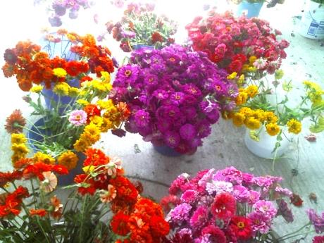 fm_flowers